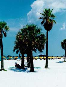 Image of North Clearwater Beach with palm trees and cabanas
